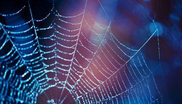 Örümcek ağıyla kanser tedavisi projesine ödül
