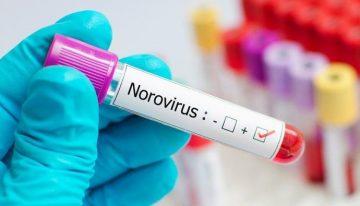 Nörovirüs nedir? Nörovirüs belirtileri nelerdir, tedavisi nasıl, bulaşıcı mı?